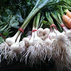 Plenty of green #garlic at #Manhattan's Tompkins Square Park #farmersmarketnyc