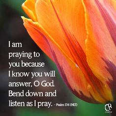 I am praying to you because I know you will answer, O God. Bend down and listen as I pray. - Psalm 17:6 #NLT #Bible verse | CrossRiverMedia.com