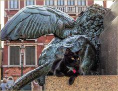 Chat Vénitien et Lion sur le Campo Manin, dans le Sestier de Saint-Marc à Venise.