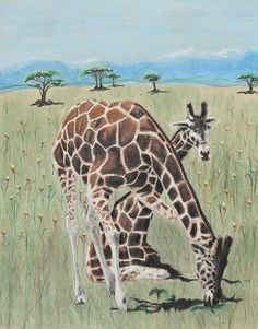 Zawadi And Sweta by Jeanne Fischer. Zawadi And Sweta are two American zoo animals who once lived at the Minnesota zoo and now live in Ohio. Giraffes are the tallest living animal in the world, considered to be even toed ungulated herbivores. Their coats tend to be white with brown and reddish patches. The eat up to 60 different species of plants including the trees.