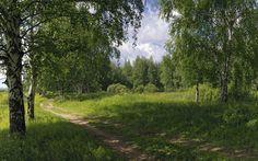 Скачать обои дорога, берёзы, лето, природа, раздел природа в разрешении 1920x1200