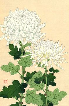 Japanese floral art, antique white chrysanthemums flowers botanical art prints, posters, paintings and woodblock prints fine art reproductions. Asian Flowers, Japanese Flowers, Chinese Contemporary Art, Contemporary Abstract Art, Modern Art, Art Floral, Japanese Chrysanthemum, Chrysanthemum Flower, Chrysanthemum Drawing