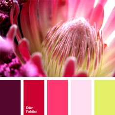 a palette for designer, color of fresh greens, color of fuchsia and shades of pink, color palettes for a decor, colors for a decor, colors for design, contrast colors, lime color, pink and color of fuchsia, shades of pink.