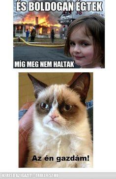 Grumpy Cat, Cat Memes, Bff, Haha, Comedy, Jokes, Reading, My Love, Funny