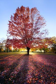 lake houses, flower pictures, crimson sunset, illinois, nature pictures, autumn, sunsets, trees, united states
