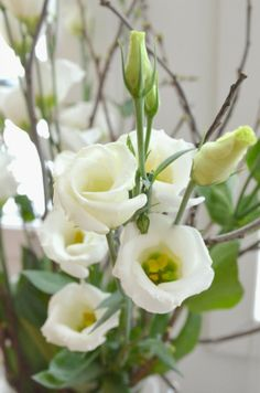 Lisianthus Dreams, Garden, Plants, Garten, Lawn And Garden, Gardens, Plant, Gardening, Outdoor