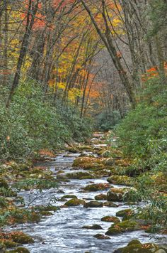 Oconaluftee River, with fall color, as taken from the Kephart Prong trailhead bridge.