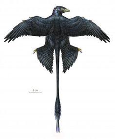 Iridescent dinosaur feathers