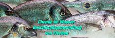 Es wird angenommen, dass die natürliche Ausscheidung von synthetischem Östrogen aus Antibabypillen eine der Hauptursachen für Geschlechtsumwandlungen bei Fischen sein kann... http://www.krebspatientenadvokatfoundation.com/chemie-im-wasser-geschlechtsanderung-von-fischen-froschen-alligatoren-etc-durch-chemikalien-im-wasser/