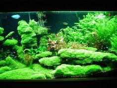 planted freshwater aquarium setup | lighting aquarium tank aquariums aquarium fish freshwater aquarium ...