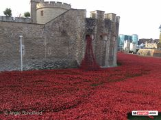 Tower of London installation consists of hand-made Ceramic poppies, each representing a British Military death during the First World War. The poppies have all been sold at each