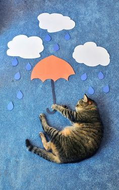 Cat w/ Umbrella