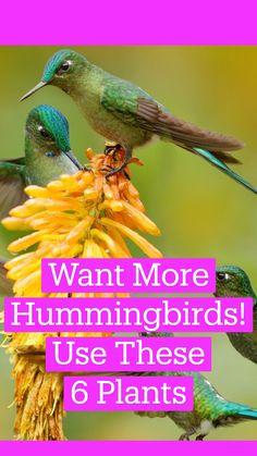Hummingbird Nectar, Hummingbird Flowers, Hummingbird Garden, Flowers That Attract Hummingbirds, How To Attract Birds, Attracting Hummingbirds, Garden Yard Ideas, Lawn And Garden, Garden Tips