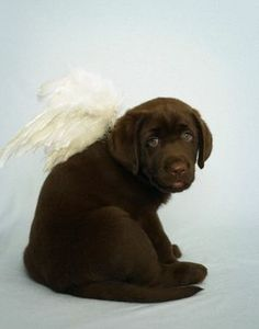 Such a simple Halloween costume for the dog -- and so cute http://thestir.cafemom.com/home_garden/162955/10_totally_clever_pet_halloween/110611/angelic_lab?slideid=110611?utm_medium=sm&utm_source=pinterest&utm_content=thestir