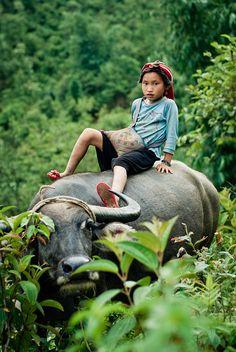 Hmong girl on water buffalo, Sapa (Vietnam)