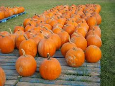 Fall Ride ... Pumpkins GALORE!!! ... 2010 ... Amish Country, Ohio   Photo by Jacquie Davis