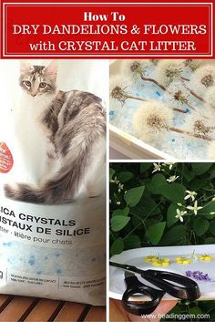 The Beading Gem's Journal: How to Dry Dandelion Clocks and Flowers Using Crystals...These can later be used in resin projects.