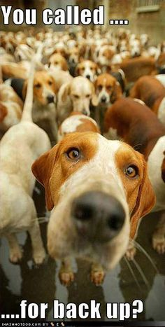 This is the Beagle Brigade!