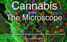 Fascinating images from the book 'Cannabis Under The Microscope: A Visual Exploration of Medicinal Sativa and C. Indica' by Ford McCann— One year, and 170 marijuana images with optical and electron scanning microscopes. Marijuana Plants, Cannabis Plant, Growing Greens, Things Under A Microscope, Medical Cannabis, Medicinal Herbs, The Cure, Kindle, Amazon