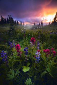 A beautiful fine art photograph titled Vivid Dreams by Daniel Greenwood Photography Nature Pictures, Cool Pictures, Beautiful Pictures, All Nature, Amazing Nature, Beautiful World, Beautiful Places, Landscape Photography, Nature Photography
