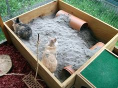 This large rabbit dig box is so cool. I'd love to make an indoor version for my chinchillas filled with chinchilla dust. Rabbit Shed, House Rabbit, Rabbit Toys, Pet Rabbit, Bunny Cages, Rabbit Cages, Pet Bunny Rabbits, Bunnies, Rabbit Enclosure