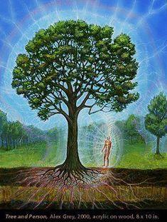 ff2f207ddd2 Donation  Legacy Tree - Boutique CoSM Mãe Natureza