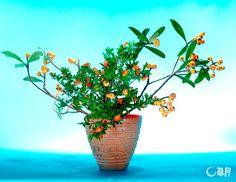 器の内側のヴィヴィッドなオレンジ色とざくろの花の色が調和し、シンプルな構成ながら華やかな印象を与えます。びわの奔放な枝ぶりで、伸び伸びと大らかな表情が生まれました。花材:びわ、ざくろ 花器: 陶器花器 The vivid orange inner side color of the vase is harmonized with pomegranate flowers to give a strong yet gorgeous impression. Unconstrained openness is expressed by the freely stretching branches of loquat. Material:Loquat, Pomegranate Container:Ceramic vase  #ikebana #sogetsu