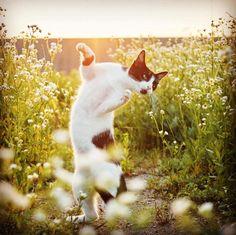 Les chats sont des Ninja, et ce photographe japonais le prouve | Ufunk.net