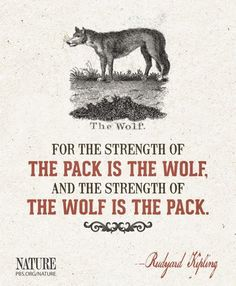 One man wolf pack!  Missing a member  Blood makes you related~loyalty makes you family ❤️
