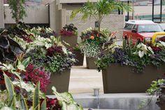 Designer: Adam Woodruff www.adamwoodruff.com Image: © 2014 Adam Woodruff + Associates All Rights Reserved Garden Landscape Design, Garden Landscaping, Garden Inspiration, Garden Ideas, Patio Planters, Outdoor Decorations, Display Design, Flower Beds, Container Gardening