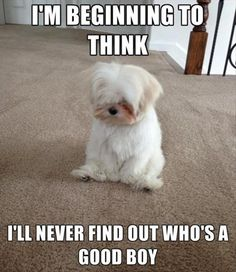 At The Mailman funny cute memes adorable dog pets meme lol funny quotes f. Barked At The Mailman funny cute memes adorable dog pets meme lol funny quotes f., Barked At The Mailman funny cute memes adorable dog pets meme lol funny quotes f. Funny Animal Quotes, Animal Jokes, Cute Funny Animals, Funny Animal Pictures, Cute Baby Animals, Funny Quotes, Cute Animal Humor, Animal Captions, Quotes Quotes
