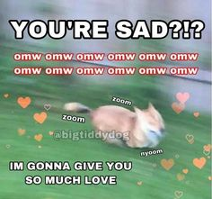 Memes Humor, Funny Memes, Crush Memes, Wholesome Pictures, Response Memes, Cute Love Memes, Cute Messages, Mood Pics, Wholesome Memes