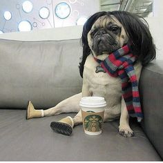 Wig wearing pug is feeling quite smug. Not every pug has the boots they call Ugg! Cute Pugs, Cute Funny Animals, Funny Animal Pictures, Cute Baby Animals, Funny Dogs, Random Pictures, Dog Pictures, Tierischer Humor, Funny Humor