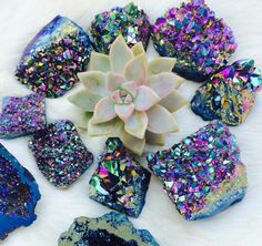 Beautiful color combination with the succulent and the crystals. Crystals Minerals, Rocks And Minerals, Crystals And Gemstones, Stones And Crystals, Gem Stones, Quarts Crystal, Crystal Aesthetic, Beautiful Color Combinations, Crystal Collection