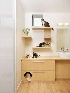 Os felinos são tudo de bom: Janeiro 2012