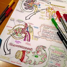 "Sarah Clifford is ""a medical student and a biology tutor with a passion for creating illustrated not"