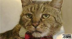 31esimo compleanno per il gatto Nutmeg | FbSocialPet.com Un gatto non farebbe mai amicizia con qualcuno che non è ben disposto verso di lui.. i gatti non sbagliano mai sulle persone! #Iloveanimals #Ilovepets #iostoconFbSocialPet #FbSocialPet Rimani aggiornato su FbSocialPet.com