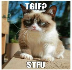 18 Times Grumpy Cat Said Exactly What He Thinks Of Stupid People - World's largest collection of cat memes and other animals Grumpy Cat Images, Grumpy Cat Quotes, Grumpy Cat Humor, Cat Memes, Grumpy Cats, Cats Humor, Kitty Cats, Funny Animal Memes, Funny Animal Pictures