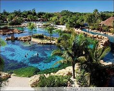 discovery cove (from @dream-vacations)