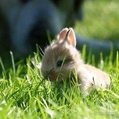 Here, bunny bunny bunny.. :-*