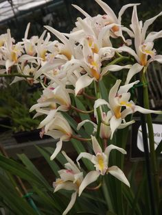 Cymbidium Orchids, Gladiolus, Carnations, Tulips, Container Vegetables, Container Gardening, Gardening For Beginners, Gardening Tips, Grain Of Sand