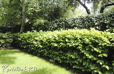 Lombok, Gardening, Plants, Lawn And Garden, Plant, Planets, Horticulture