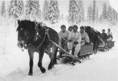 HORSES IN WINTER WAR.         Finland's total horse stem before Winter War in autumn -39 was altogether 317 604 grown up horses. There were 144 307 ineligible horses to war and eligible ones 173 297. Foals were around 60 000. There were around 4700 horses ✿. ☺