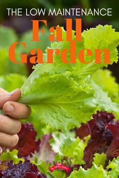 Grow fresh vegetables and herbs this fall in your vegetable garden. Fall gardening is low maintenance with cooler temps and fewer pests. Find out what to grow to have a easy and abundance fall garden! Edible Plants, Edible Garden, Growing Vegetables, Fresh Vegetables, Veggies, Gardening For Beginners, Gardening Tips, When To Plant Garden, Container Gardening Vegetables