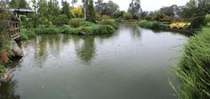 Japanese garden in the rain - Yahoo Image Search Results