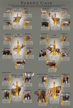 The Parent Case cartridge poster visually simplifies the vastness and complexities of hunting cartridges available in the US. The poster takes six of the most well-known and influential hunting cartridges Deer Hunting Tips, Big Game Hunting, Hog Hunting, Coyote Hunting, Hunting Rifles, Turkey Hunting, Whitetail Hunting, Deer Hunting Blinds, Pheasant Hunting