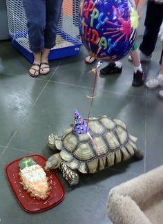 Tortoise birthday!!