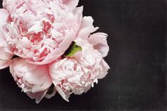 Obsessed with peonies :) I wish some would magically appear on my desk!