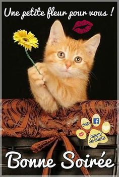 Image Chat, Cats, Animals, Facebook, Hapy Day, Sunday Humor, Evening Quotes, Gatos, Animales