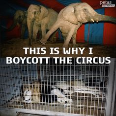 so much cruelty involved in capturing and training circus animals. Stop Animal Cruelty, Vegan Animals, Save Animals, Animal Welfare, Animal Quotes, Animal Rights, Animal Rescue, Wildlife, Creatures